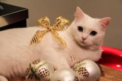 Le chat de noël !