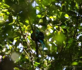 Le fameux quetzal